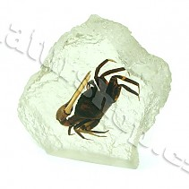 Turns crab in plastic decorative