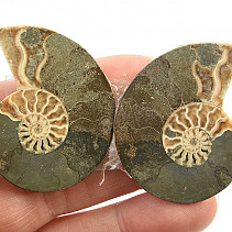 Ammonite fossil pair with shine (24g)