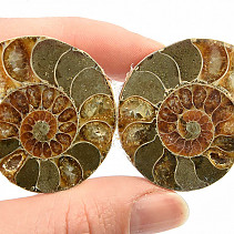 Ammonite fossil pair (35g) with shine
