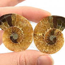 Fossil ammonite pair (17g) with shine