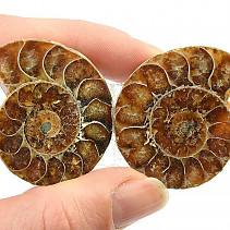 Ammonite fossil pair (31g) with shine