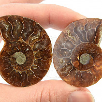 Fossil ammonite pair (21g) with shine
