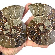 Ammonite a select few (Madagascar) 134 mm