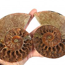 Ammonite a select few (Madagascar) 137 mm