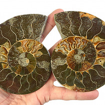 Ammonite selection halves (Madagascar) 120 mm