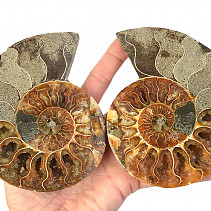 Ammonite a select few (Madagascar) 132 mm