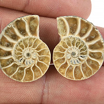 Collection ammonite pair 6.3g