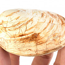 Petrified Mussels (Madagascar) 140g